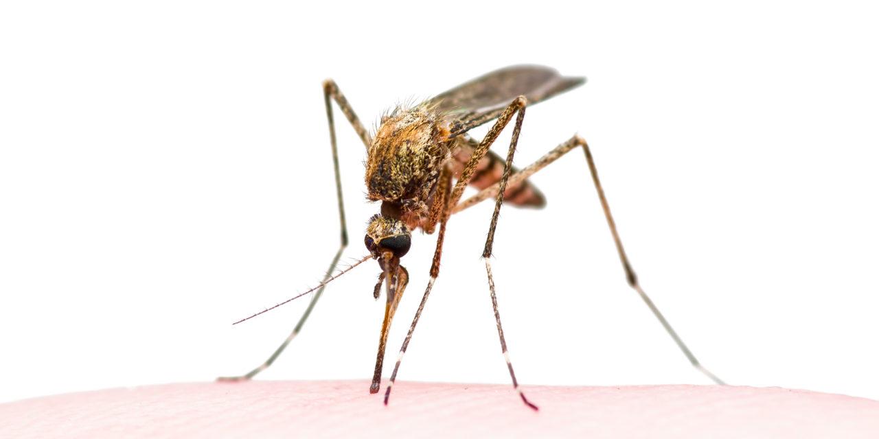 Help mee muggenziekten te voorkomen. Werkt een muggenalert?